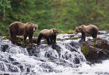 Lindblad Cruises Alaskas Coastal Wilderness